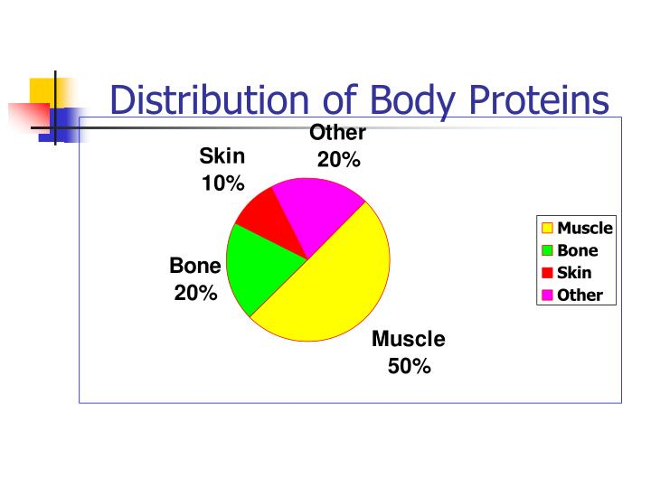 Distribution of Body Proteins
