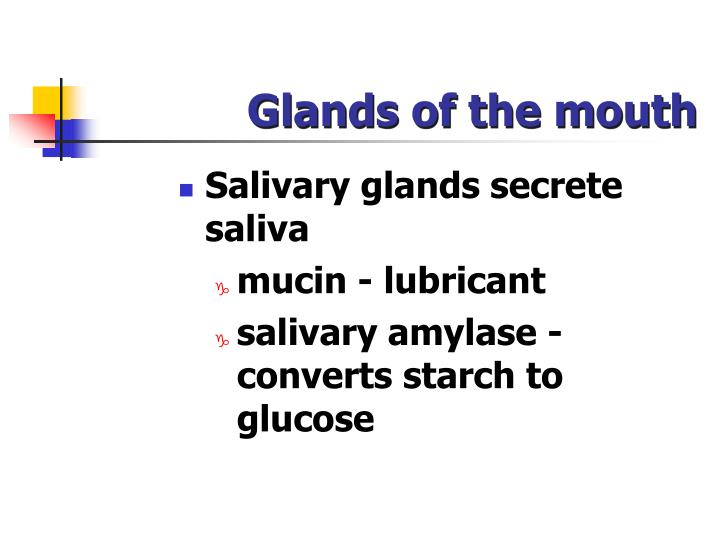 Glands of the mouth