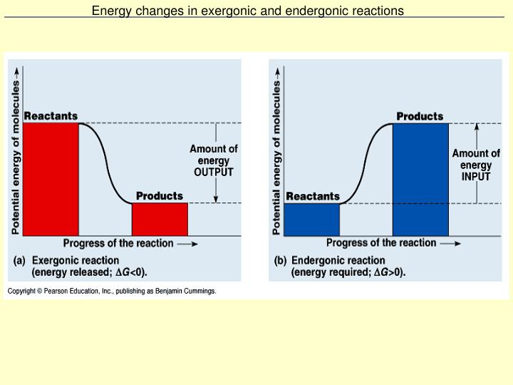 Energy changes in exergonic and endergonic reactions