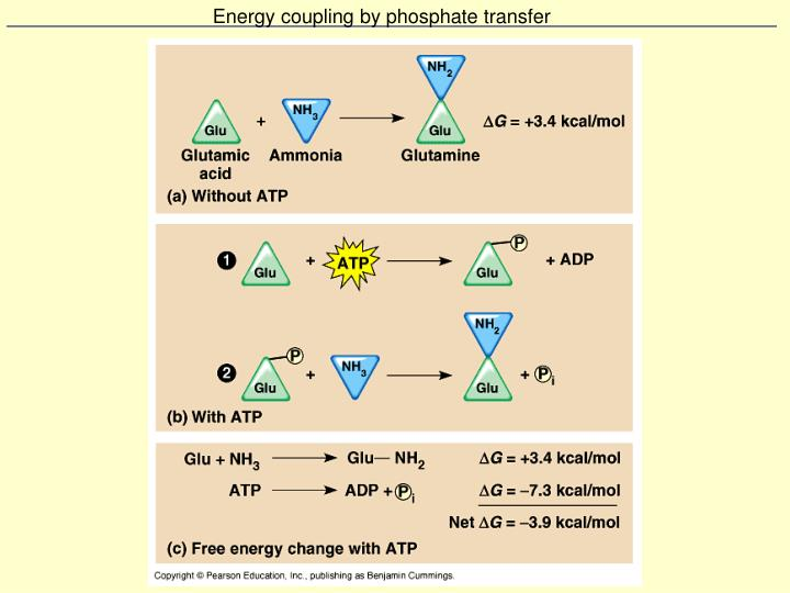 Energy coupling by phosphate transfer