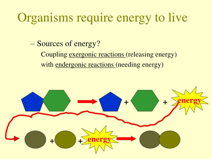 Organisms require energy to live