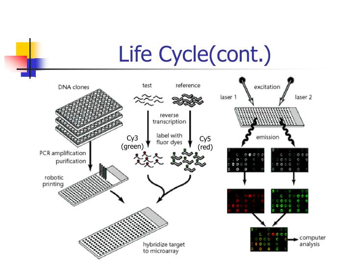 Life Cycle(cont.)