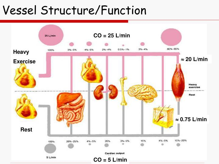 Vessel Structure/Function