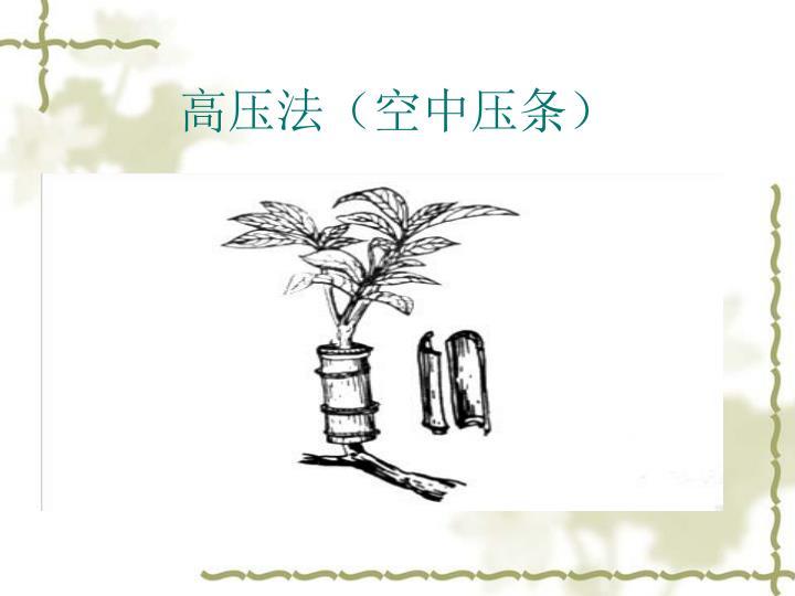 高压法(空中压条)