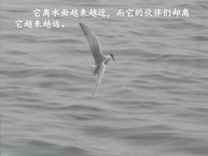 它离水面越来越近,而它的伙伴们却离它越来越远。