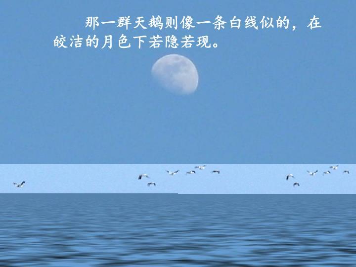 那一群天鹅则像一条白线似的,在皎洁的月色下若隐若现。