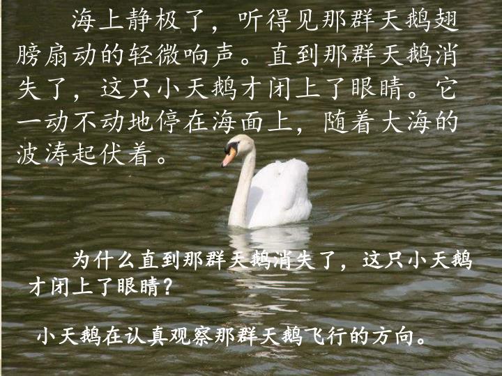 海上静极了,听得见那群天鹅翅膀扇动的轻微响声。直到那群天鹅消失了,这只小天鹅才闭上了眼睛。它一动不动地停在海面上,随着大海的波涛起伏着。