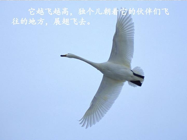 它越飞越高,独个儿朝着它的伙伴们飞往的地方,展翅飞去。