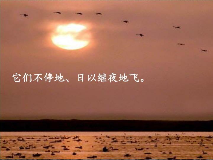 它们不停地、日以继夜地飞。