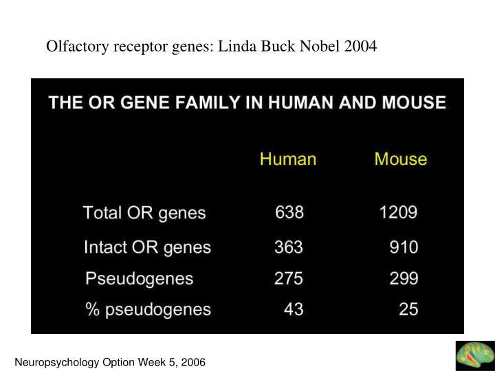 Olfactory receptor genes: Linda Buck Nobel 2004