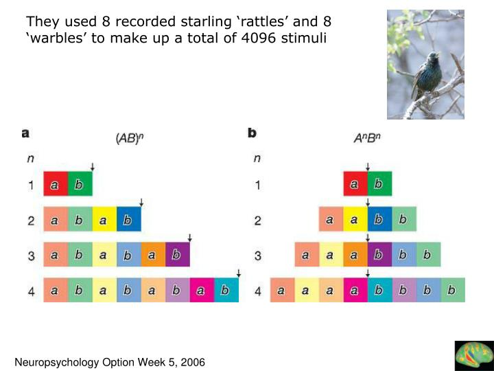 They used 8 recorded starling 'rattles' and 8 'warbles' to make up a total of 4096 stimuli