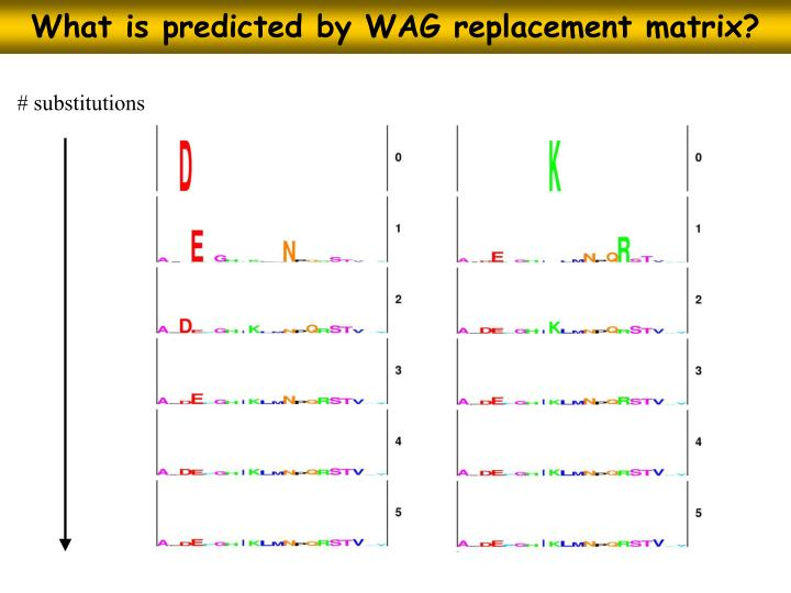 What is predicted by WAG replacement matrix?