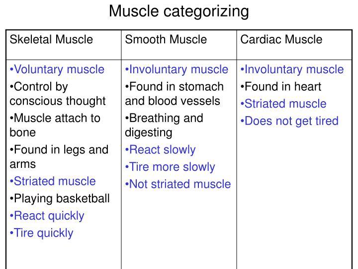 Muscle categorizing