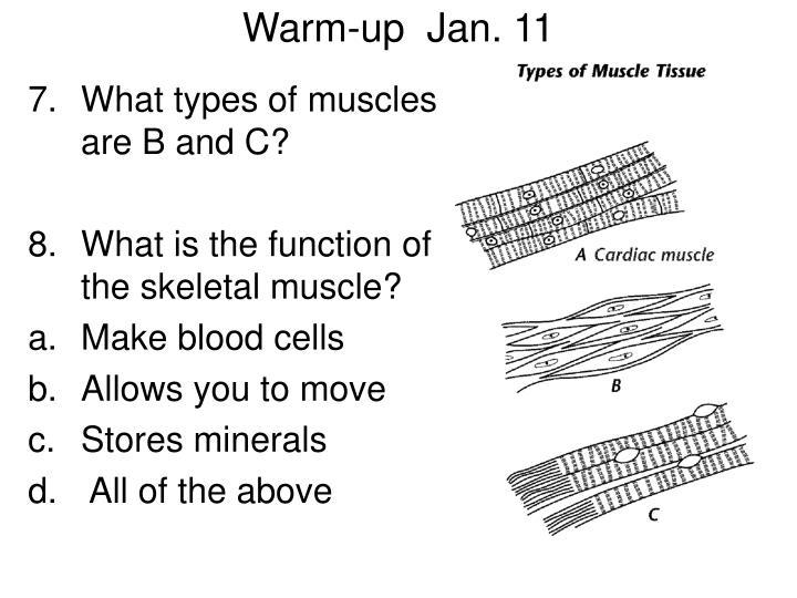 Warm-up  Jan. 11