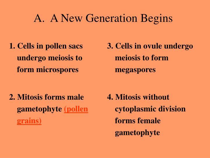 1. Cells in pollen sacs undergo meiosis to form microspores