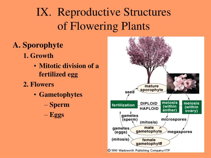 Ix reproductive structures of flowering plants