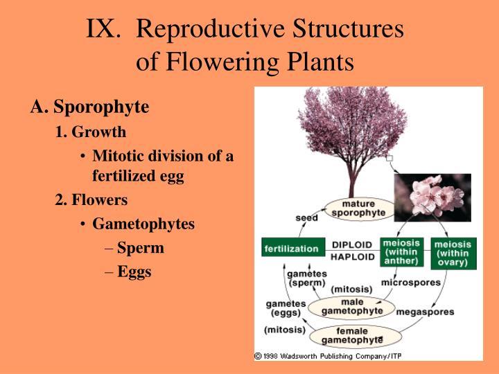 IX.  Reproductive Structures