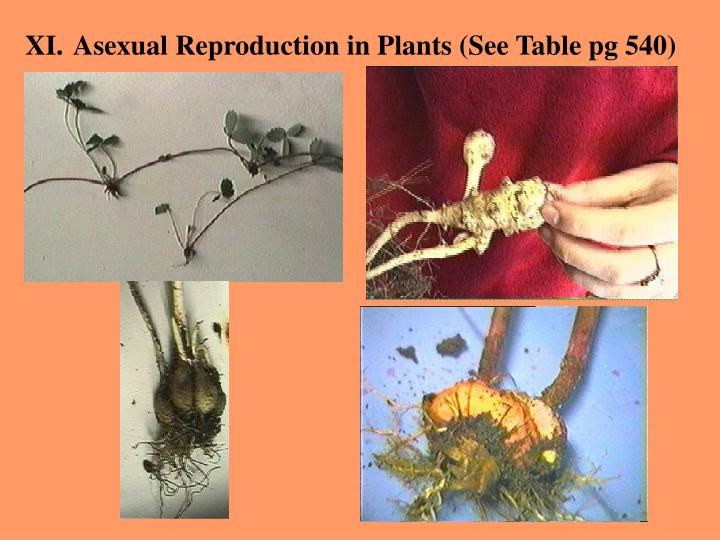 Asexual Reproduction in Plants (See Table pg 540)