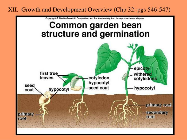 XII.  Growth and Development Overview (Chp 32: pgs 546-547)
