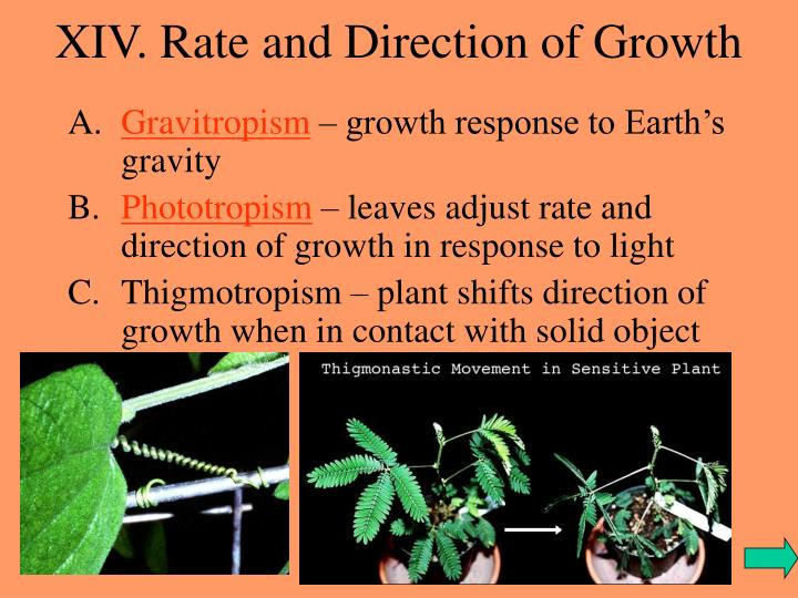 XIV. Rate and Direction of Growth