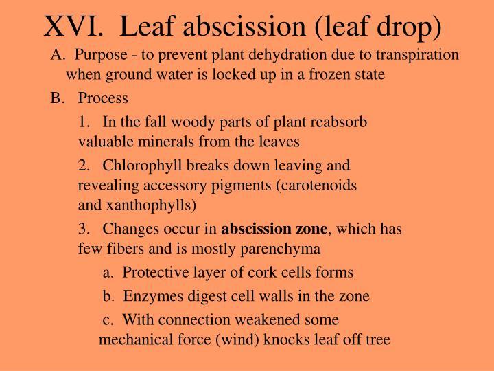 XVI.  Leaf abscission (leaf drop)