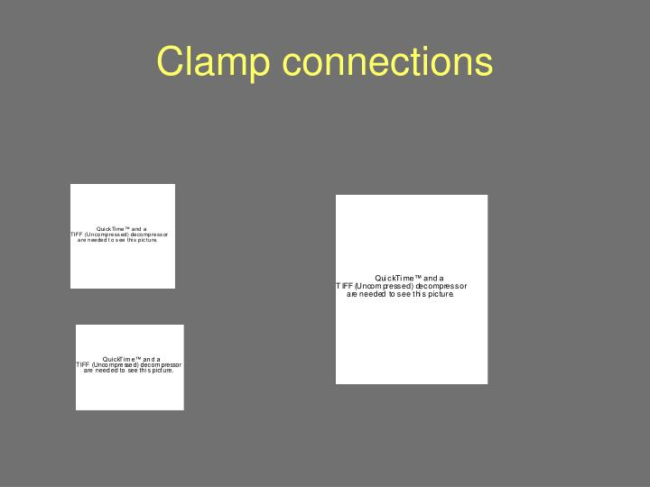 Clamp connections