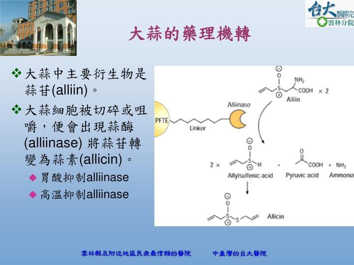 大蒜中主要衍生物是蒜苷