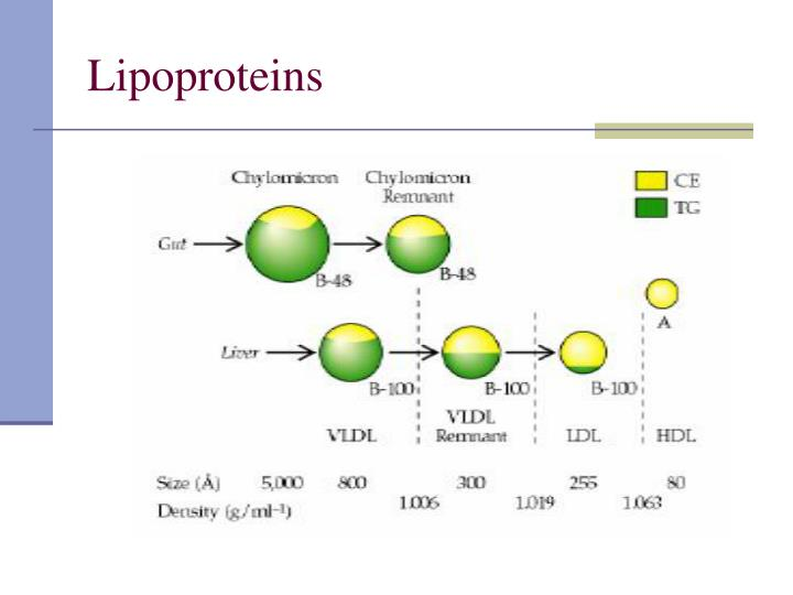 Lipoproteins