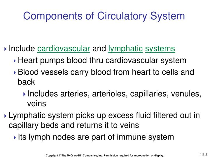 Components of Circulatory System