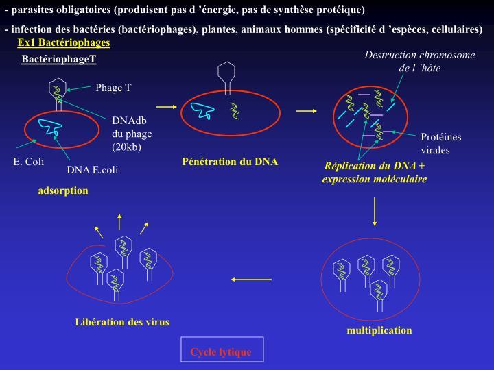- parasites obligatoires (produisent pas d'énergie, pas de synthèse protéique)