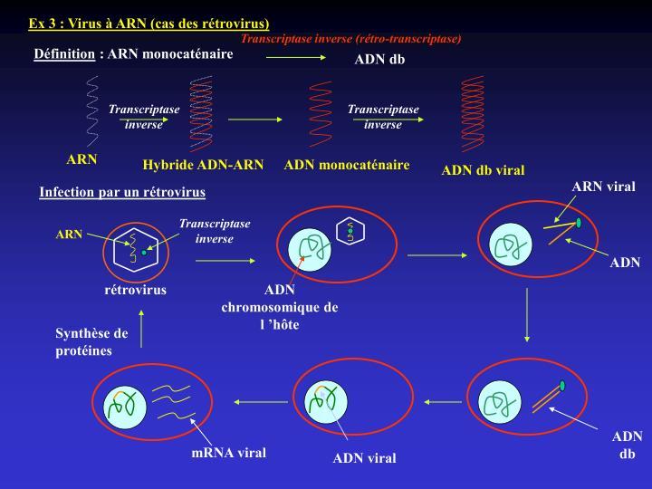 Ex 3 : Virus à ARN (cas des rétrovirus)