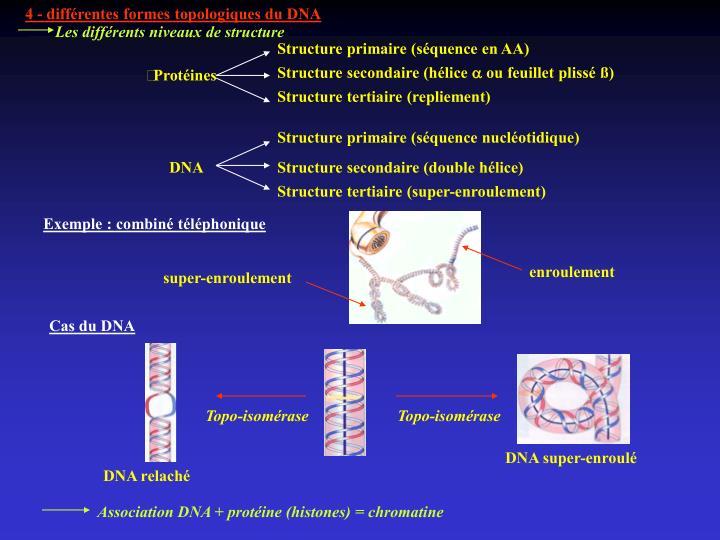 4 - différentes formes topologiques du DNA