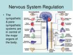 nervous system regulation