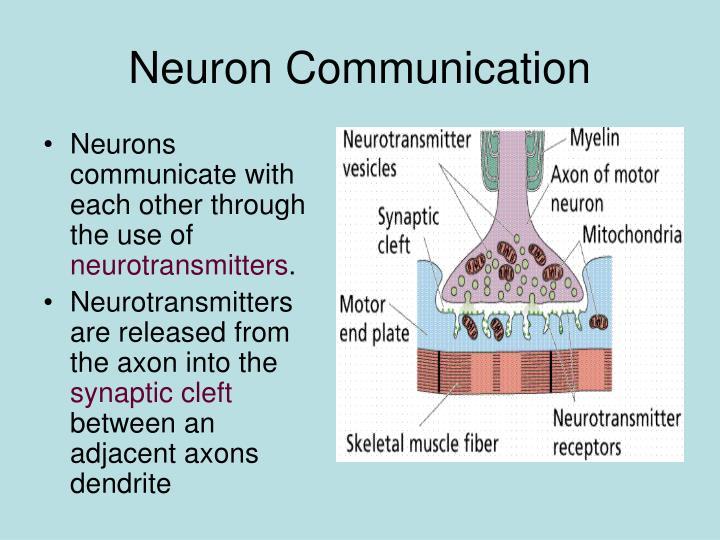 Neuron Communication