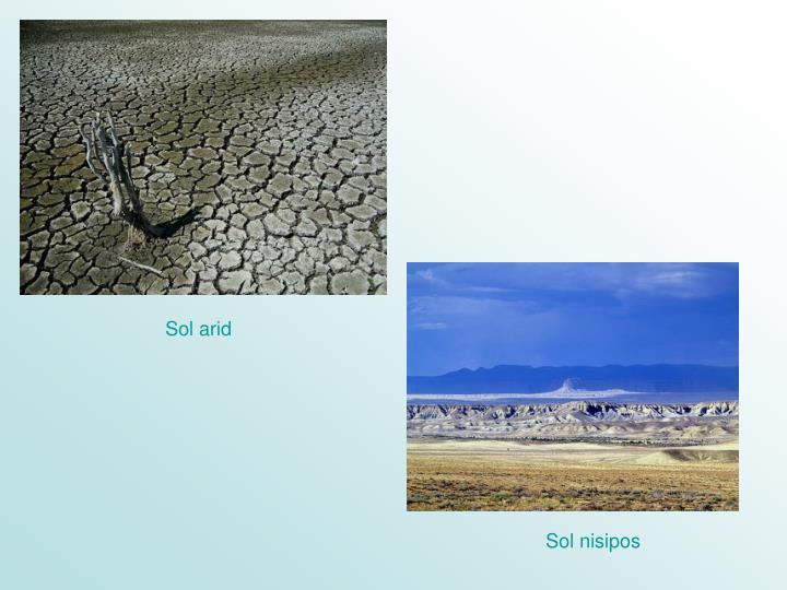 Sol arid