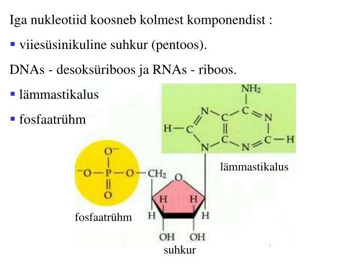 Iga nukleotiid koosneb kolmest komponendist :