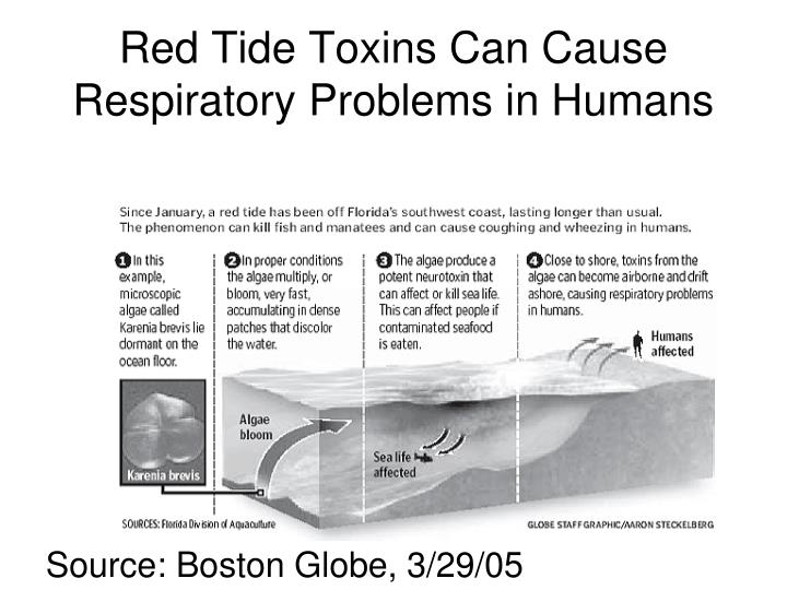 Red Tide Toxins Can Cause Respiratory Problems in Humans