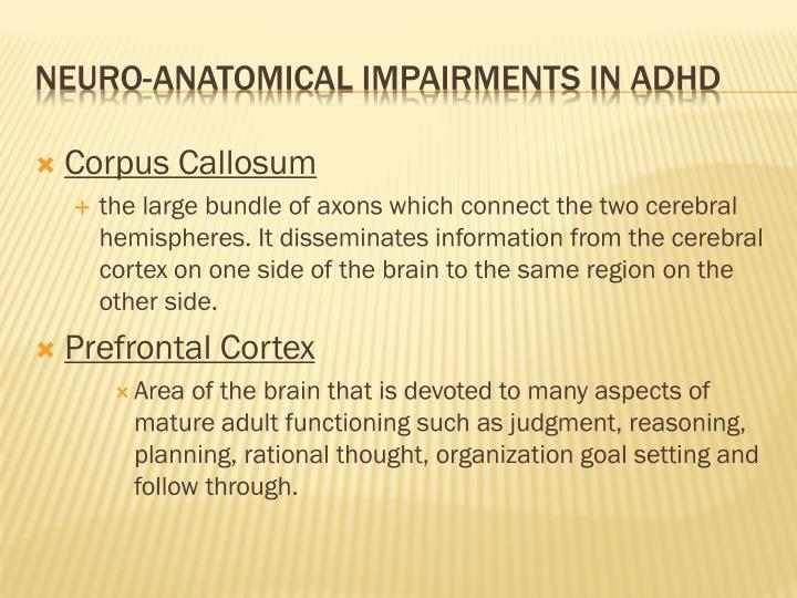 Corpus Callosum