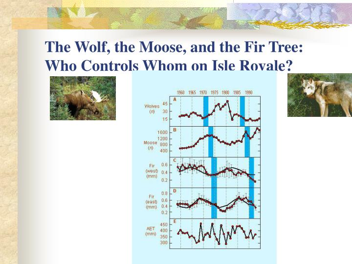 The Wolf, the Moose, and the Fir Tree: