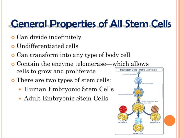 General Properties of All Stem Cells