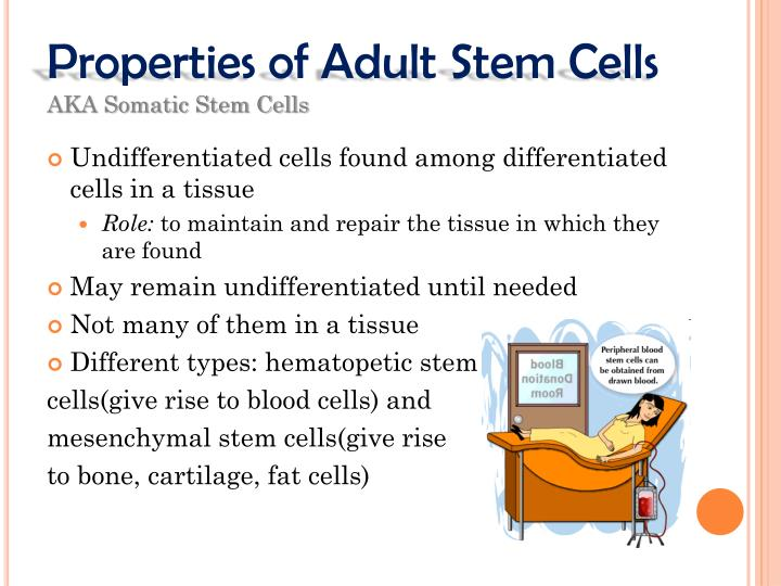 Properties of Adult Stem Cells