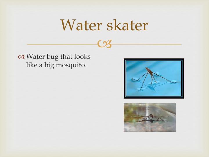 Water skater