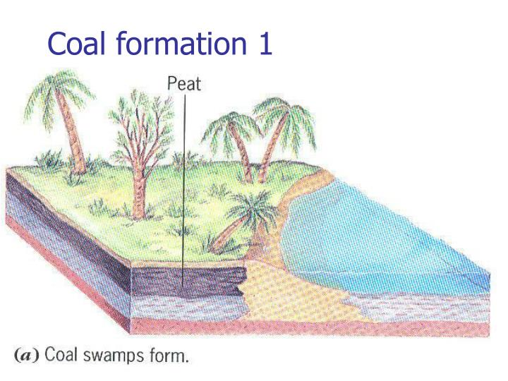 Coal formation 1
