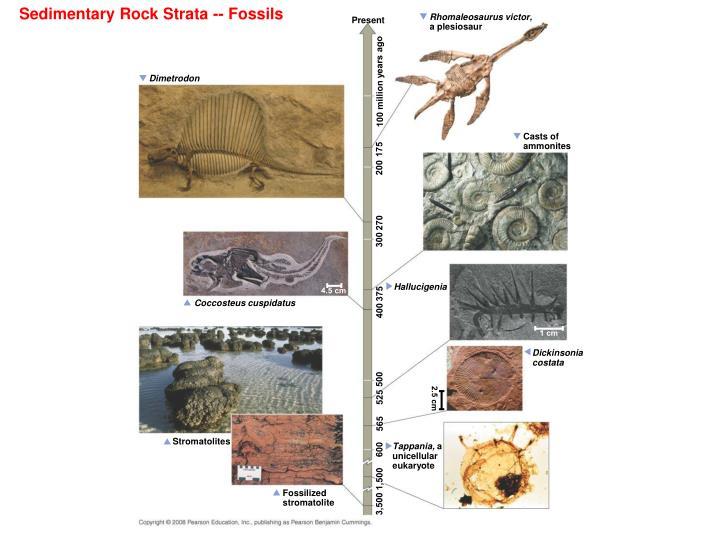 Sedimentary Rock Strata -- Fossils
