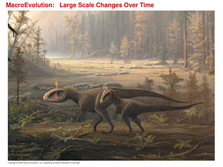 MacroEvolution:   Large Scale Changes Over Time