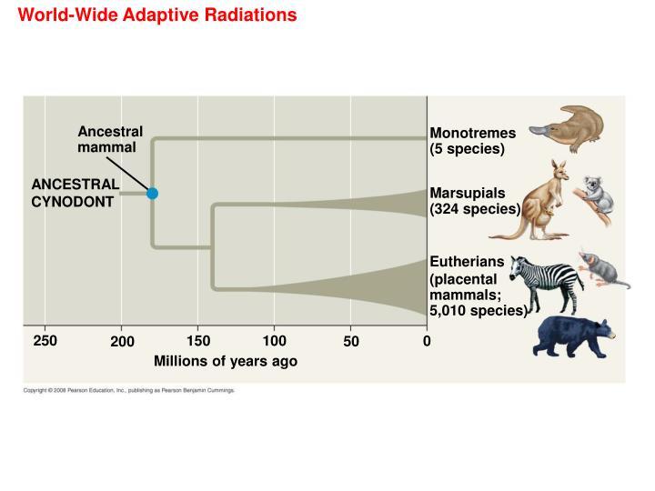 World-Wide Adaptive Radiations