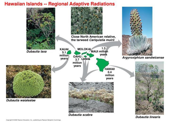 Hawaiian Islands -- Regional Adaptive Radiations
