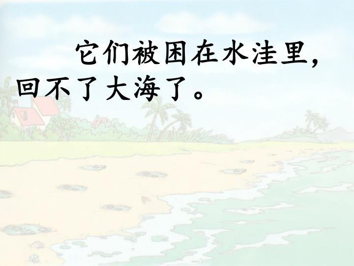 它们被困在水洼里,回不了大海了。