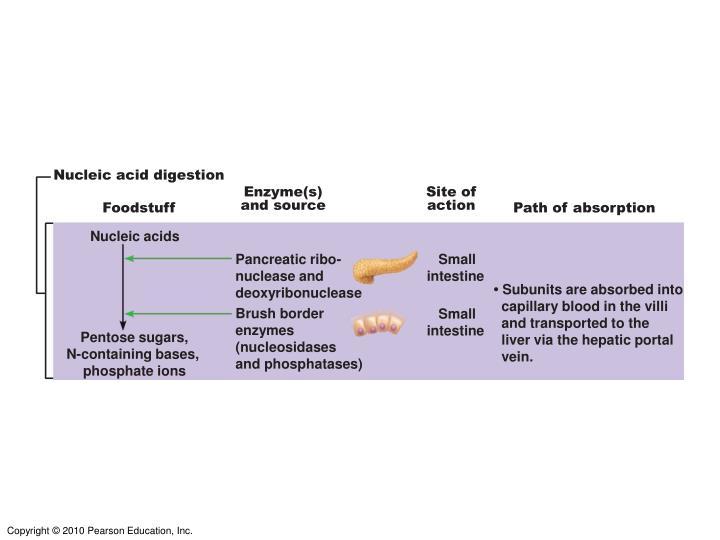 Nucleic acid digestion