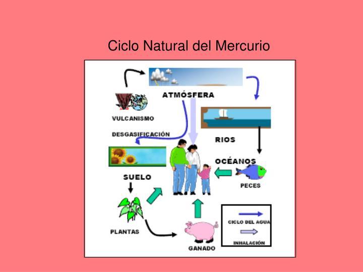 Ciclo Natural del Mercurio